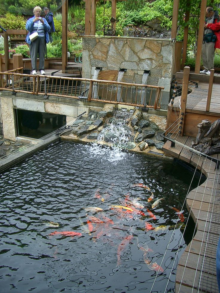 Koi pond waterfall pictures small garden koi waterfall for Koi pool water gardens cleveleys