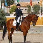 kwpn san jorge caballo maestro en venta en Cataluña :: Venta de Caballos. HE3297403