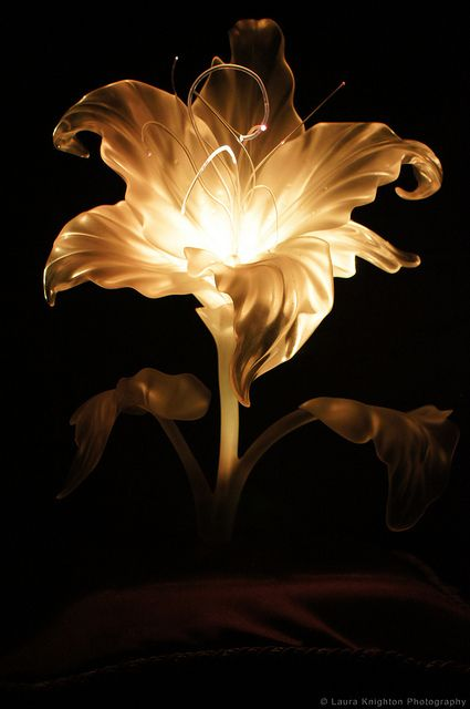 Flower, gleam and glow