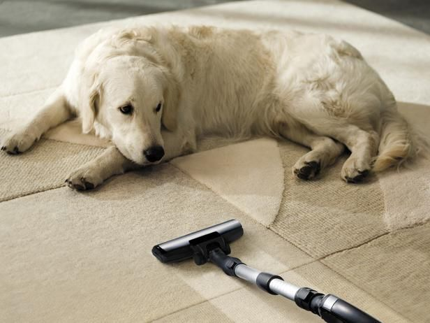 12 Tips For Pet Friendly Decorating Carpet Cleaning