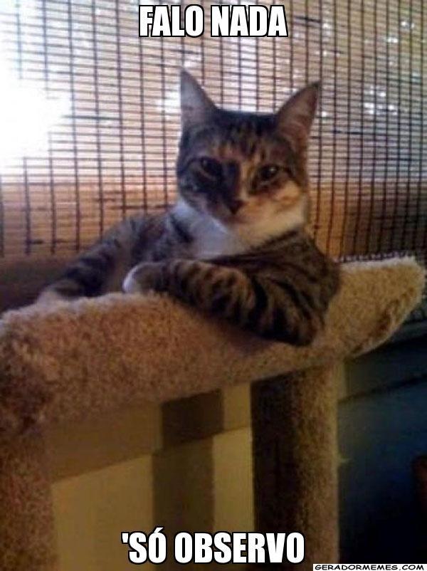 falo nada 'só observo - O gato mais interessante do mundo | Gerador Memes
