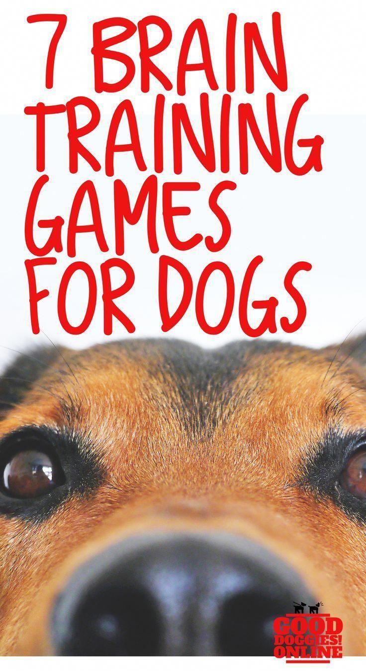 Dog Training Teach Your Dog Dog Learning Dog Tips Dog Hacks