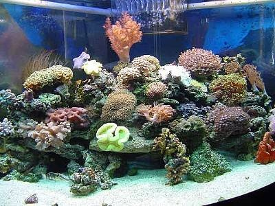 Photos of both small and large reef tanks aquariums for Small saltwater fish tank