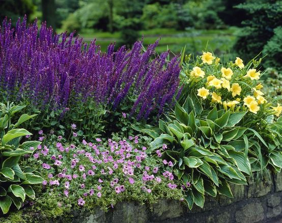 Best 25 Herbaceous border ideas on Pinterest Garden inspiration