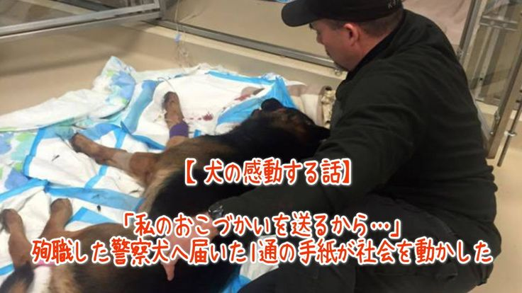 【1分涙腺崩壊】「私のおこづかいを送るから…」殉職した警察犬へ届いた1通の手紙が社会を動かした【犬の感動する話】  少女が自分のおこづかいを送ってまで望んだのは… 職務中に銃で撃たれ命を落とした警察犬のジェスロ。彼のもとに届いた手紙に大きな反響が寄せられました。 「私のおこづかいを送るから…」殉職した警察犬へ届いた1通の手紙が社会を動かした.    ☆☆☆☆☆☆ 涙腺崩壊-1分で感動!では、 泣ける話、感動する話を 厳選して配信しています。   音と画像で心震える感動を…。  チャンネル登録すると 新しい動画がスグに見れます☆ ▼▼▼ http://www.youtube.com/subscription_center?add_user=namidaafureru
