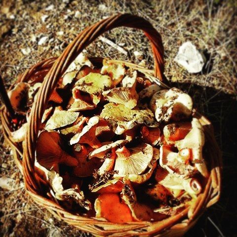 What we do while waiting for summer to arrive...want to join?  #mushroompicking #skyros #island #greece #roomstolet #travel #summer #easter #sea #smallport #sailing #aegeansea #sporades #fall #spring #mushrooms #wildmushrooms #cook #forest