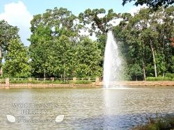 Fountain in the lake - Gallery - Woodlands Realty Pros