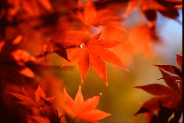 勝持寺 1993年11月22日撮影