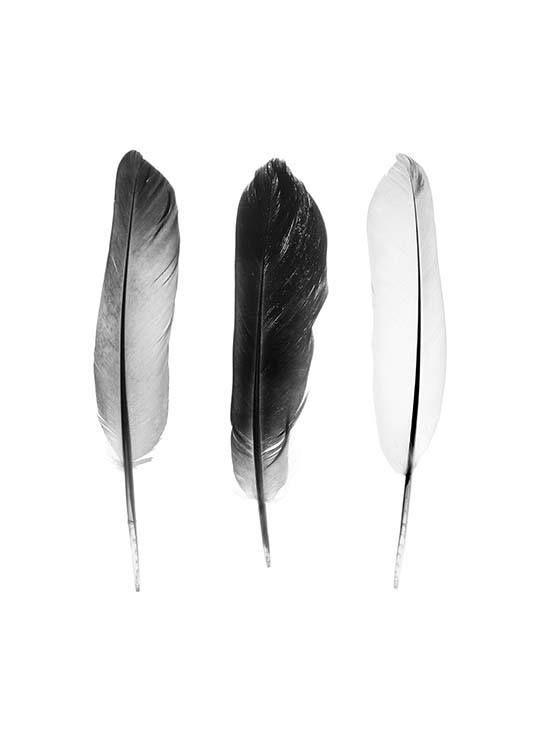 Black and white feathers Poster in der Gruppe Poster / Größen und Formate / 30x40cm bei Desenio AB (3634)