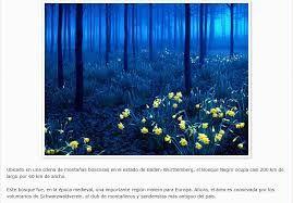 Bosque Negro, Alemania - Buscar con Google