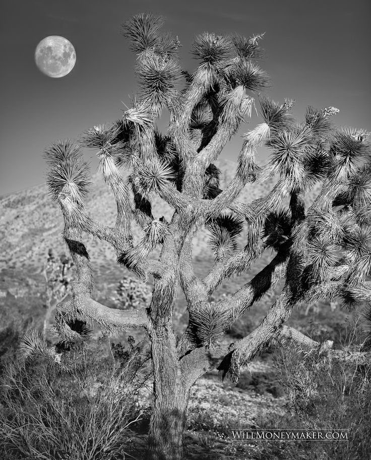 Here's a black-and-white photo I took with Matt. We were hiking through the desert in Palmdale, California... http://www.willmoneymaker.com/