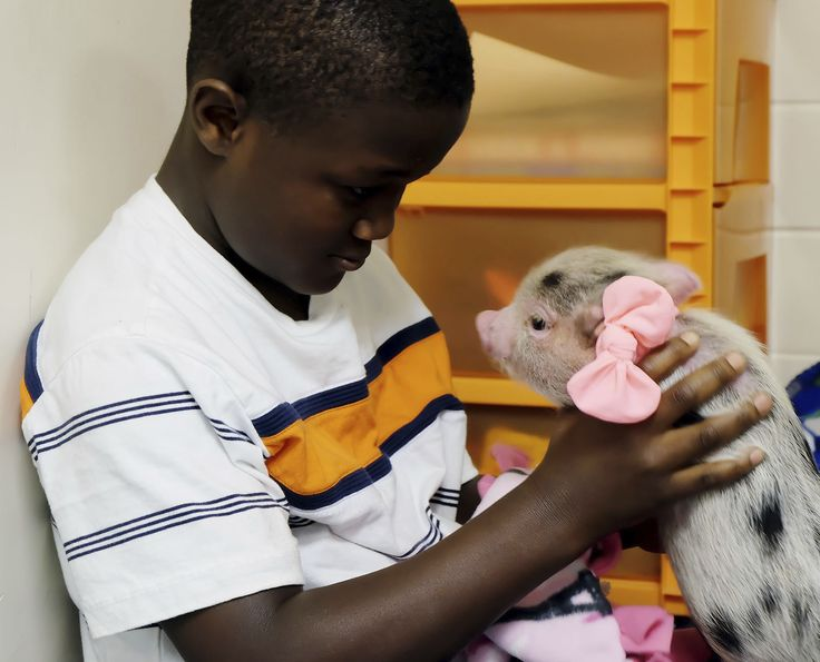MUSCATINE, Iowa (AP) - An elementary school in eastern Iowa has found a new way to help special education students manage emotions and focus on learning: a therapy pig. A small pig named Frankie serves as a calming mechanism for students showing emotional distress in the classroom, said Trina Hepker, a special education teacher at Franklin Elementary School in Muscatine. When students get upset or frustrated, they're asked to sit and read to the pig for 15 minutes. Hepker tells the Muscat...