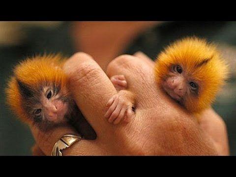 Смешные маленькие экзотические животные