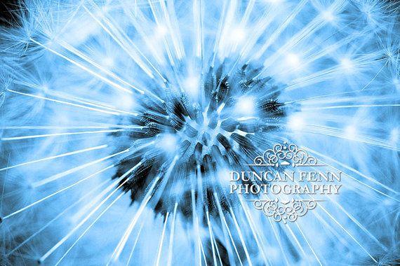 Macro of a Dandelion | Fine Art Photography | Blue and Cyan Wall Art