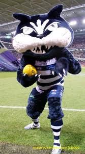 geelong cats - Google Search