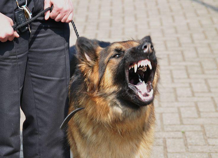 O uso de cães por empresas de segurança privada e de vigilância foi proibido em definitivo pela Câmara Municipal de São Paulo e a produção de peles e foie gras