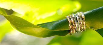 Risultati immagini per bjork jewelry