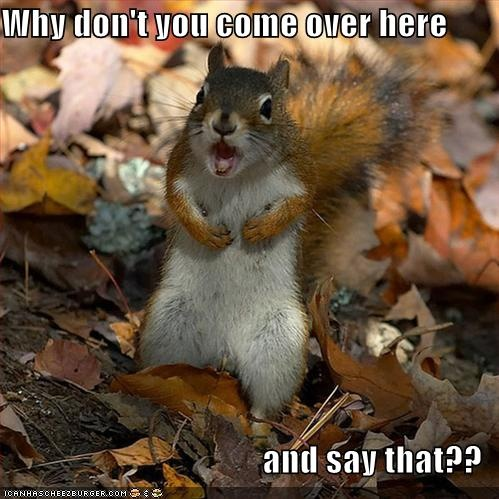 990806215ca5837da9b3182c2eb02461 funny animal pictures humorous pictures remember me?you should i'm your worst nightmare squirrel