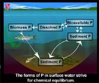 Phosphorous in an Aquatic Ecosystem