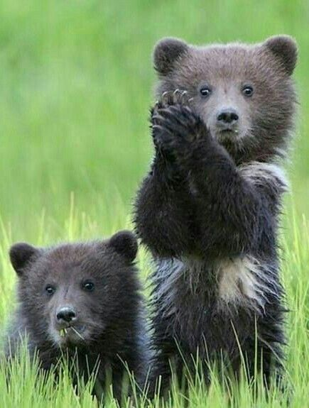 Clap Your Hands Clever Bear!