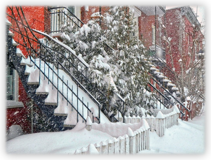Tempête de neige et poudrerie sur Montréal annoncé pour après-demain le 19 mars 2013. Donc, les tits oiseaux on reste au chaud dans la maison pour encore quelque temps !