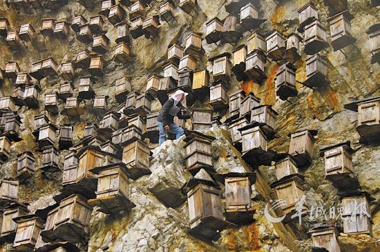 Crazy Chinese bee keepers
