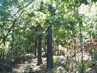 OKLAHOMA Mtn/Hunting Land-5 acres-$155/mo- 0% for 5yr  Total Price $17500