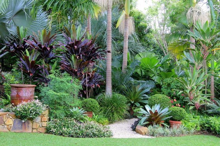 Trachelospermum jasminoides 'Variegatum', Nandina domestica, Bismarkia palm, Cordyline 'negra', Archontophoenix palm, Buxus japonica, liriope, Cycad, Licuala ramsayi, Alcantara.