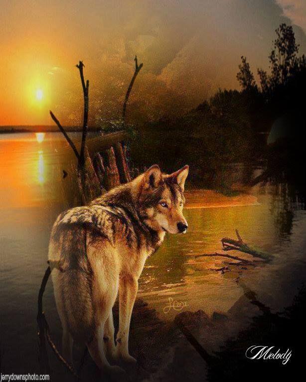 бросил доманькову картинки уходящего волка решение