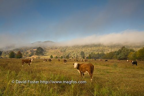 Early Morning Near Myrtleford, Victoria