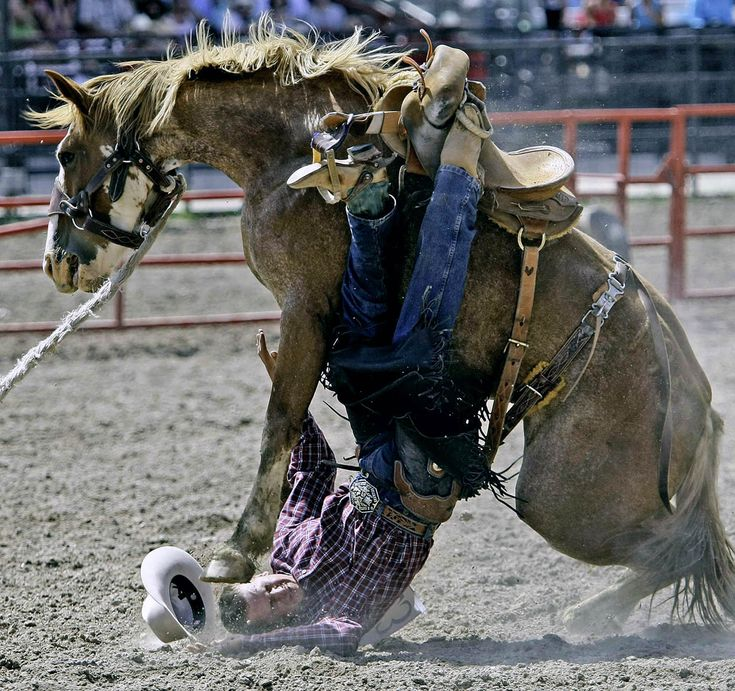 Best 25 Cheyenne Rodeo Ideas On Pinterest Cheyenne
