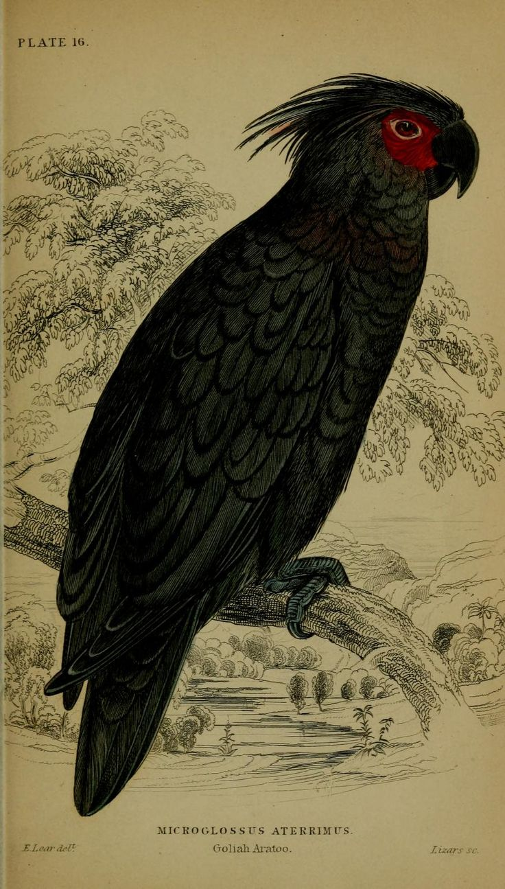 Natural history of parrots. - Biodiversity Heritage Library