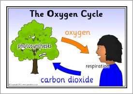 The Oxygen Cycle posters (SB8190) - SparkleBox | Plants ...