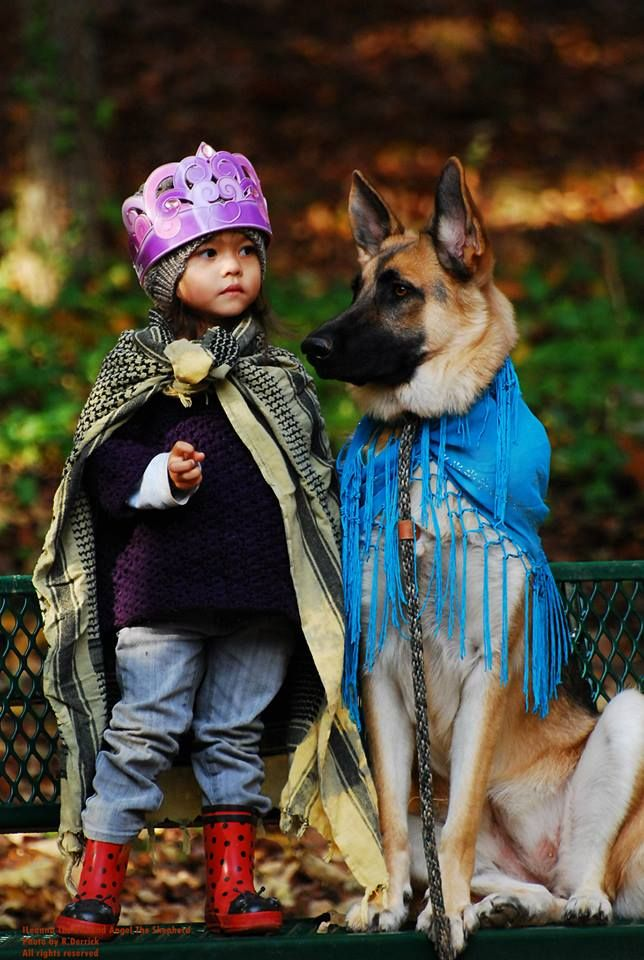 German Shepherd Dog playing dress up with his human kid.