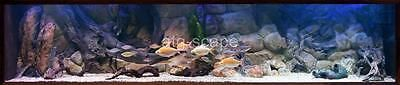 AQUARIUM BACKGROUND 3D AMAZON  FOR 150/210g TANK SIZE: 72x29 - EASY TO INSTALL