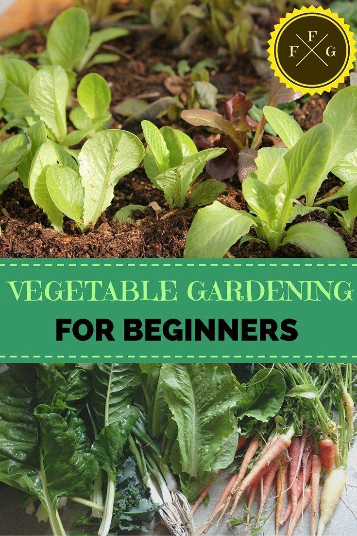 Vegetable Gardening For Beginners Vegetables Vegetable Gardening And Gardening For Beginners