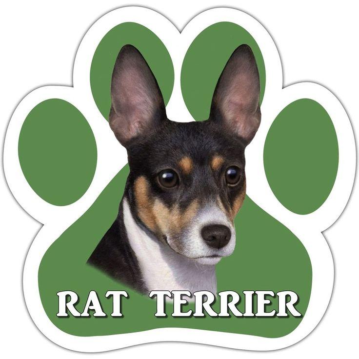 3865 Best Ratties Images On Pinterest Rats Rat Terriers And Rat