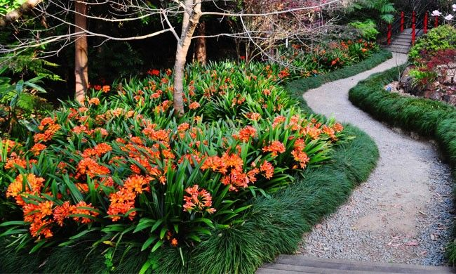 Love this Clivia + Mondo Grass combination for ground covers! Check out more…