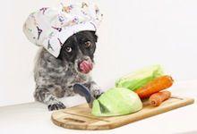 Hunde: Fressen. Leckerlies backen, Näpfe, ...