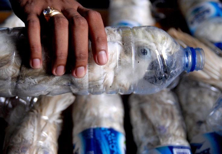 More than 1,000 wildlife rangers were killed between 2004 and 2014. A policeman holds a water bottle with a yellow-crested cockatoo put inside for illegal trade, at the customs office of Tanjung Perak port in Surabaya, East Java province, Indonesia, May 4, 2015 in this picture taken by Antara Foto. Police arrested one man traveling by ship from Makassar, Sulawesi with 22 of the endangered cockatoos held inside water bottles. REUTERS/Antara Foto/Risyal Hidayat  via @AOL_Lifestyle Read more…