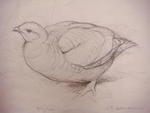 Grey Hen, J. F. [Fenwick] Lansdowne, Victoria, British Columbia, Canada.