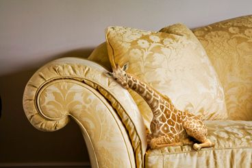 ::sigh:: If only petite lap giraffes were real. I would give one to my friend Libs.