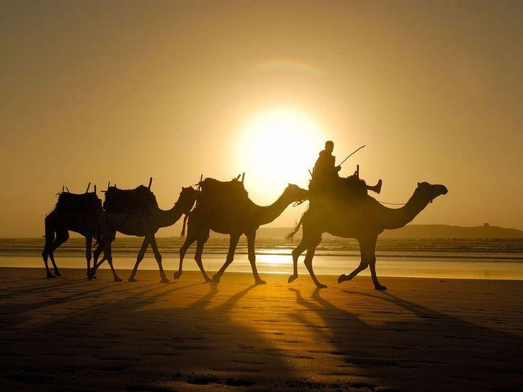 Met oude steden, rijke cultuur en de #Sahara in de voortuin is het zonde om alleen te genieten van zon, zee en strand. Hoogtepunten in #Tunesië.