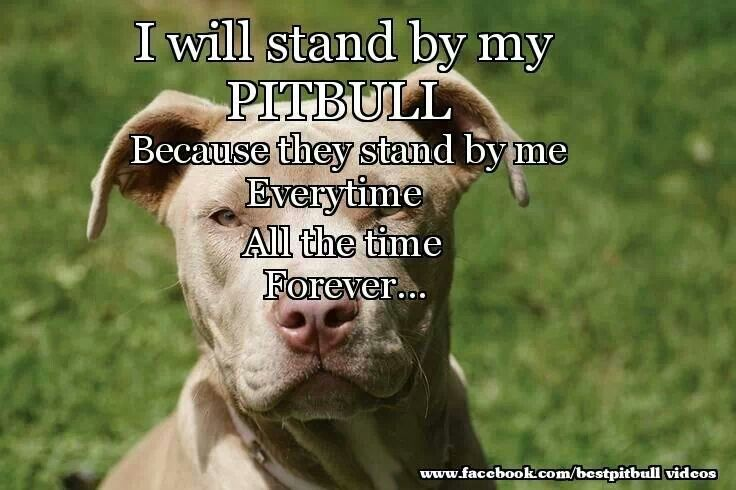 I stand by my pitbull
