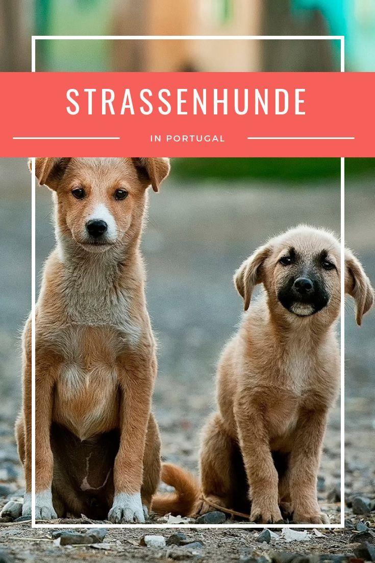 Strassenhunde In Portugal Vierbeiniger Nachwuchs Fur Uns Tierheim Hunde Tierschutz Hunde Und Hunde