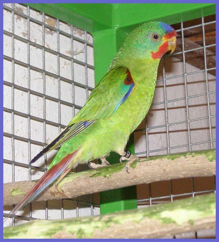 Ktorého ? : Papágaj shop - predaj papagájov, všetko pre papagáje