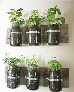 Almost any herb can be started from seed in a mason jar. Chive, thyme, and rosemary are excellent choices. For each, follow package instructions and keep soil warm, moist, and in full light until seeds have germinated. When they outgrow their space, you can cut them as needed, or transplant them into a larger container or into the garden. See DIY Link below