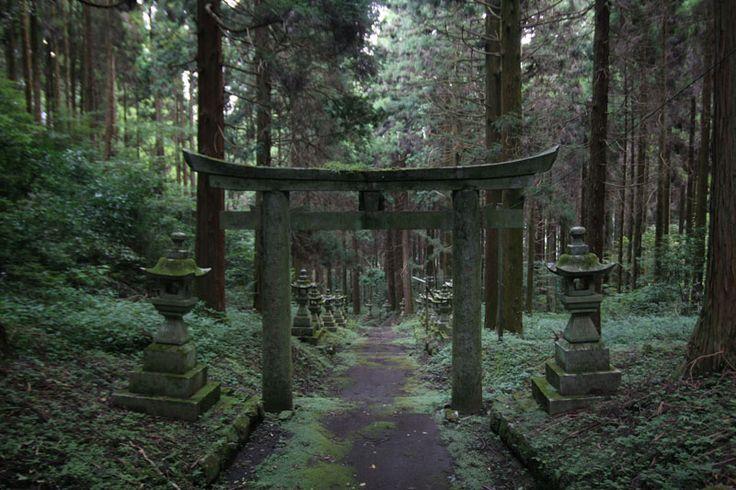 Forest-Shrine-in-Japan-6.jpg (800×533)