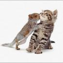 #Animal #Baby #love #Kiss Kitten: Baby Love, A Kiss, Funny Baby Animals, Animal Baby, Kiss Kittens, Cutest Baby Animals, Love Kiss, Animal Babies, Animalia Baby