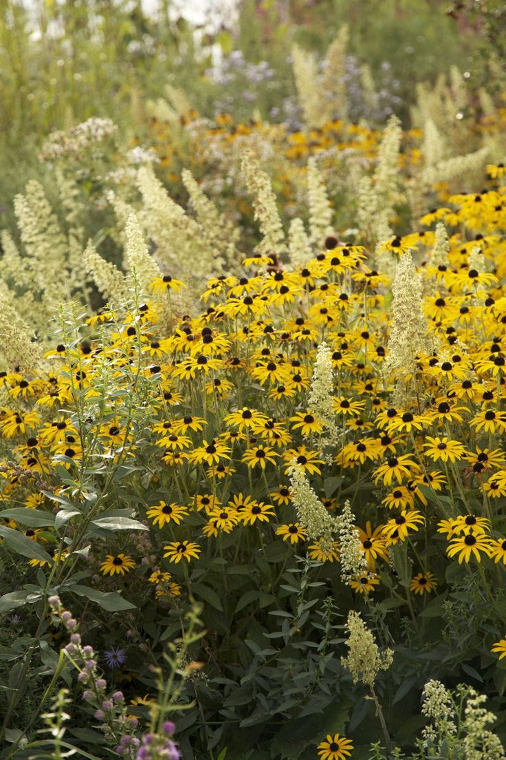 Have variety in a pollinator landscape